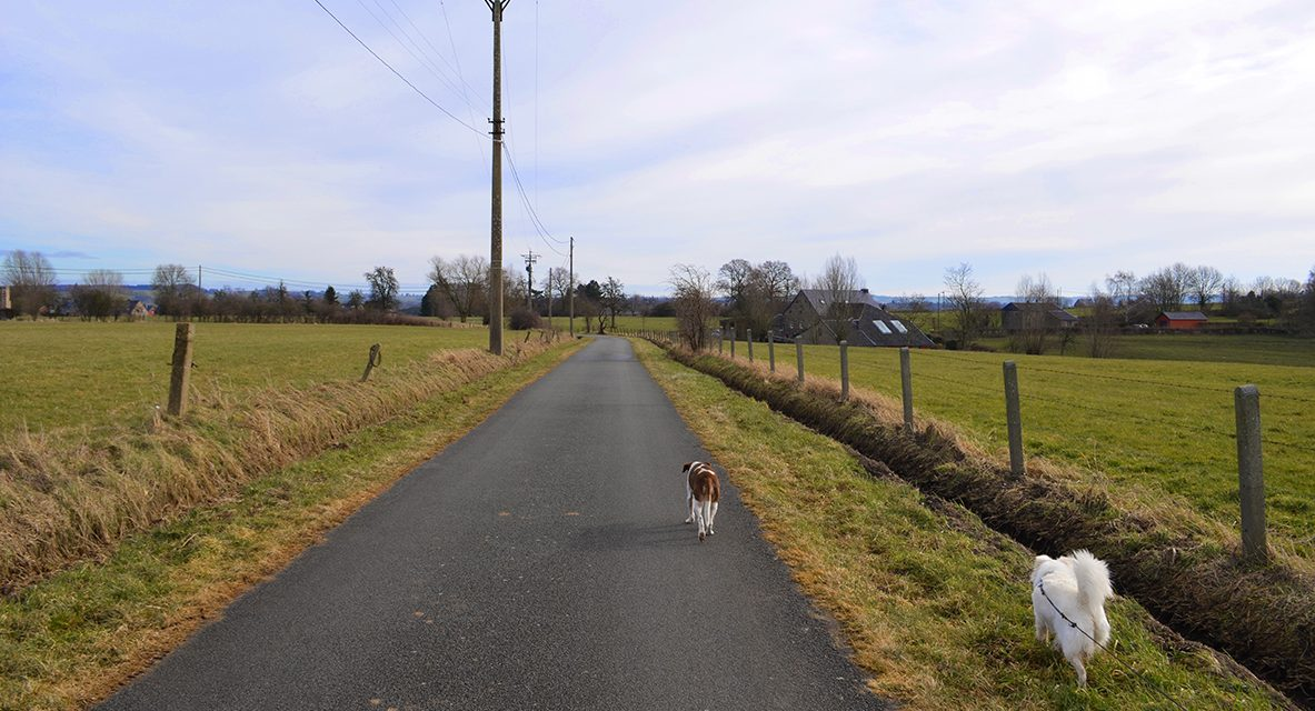 Walking with dogs:  A stroll on the plateau de Herve