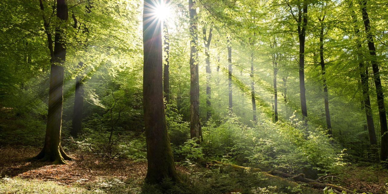 The Ardennes through the seasons