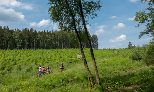 The electric MTB, an effortless way to discover the Ardennes
