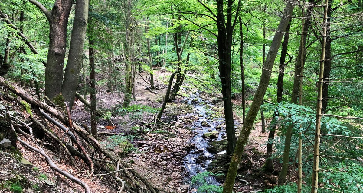 Superb walk in the Hertogenwald forest – High Fens