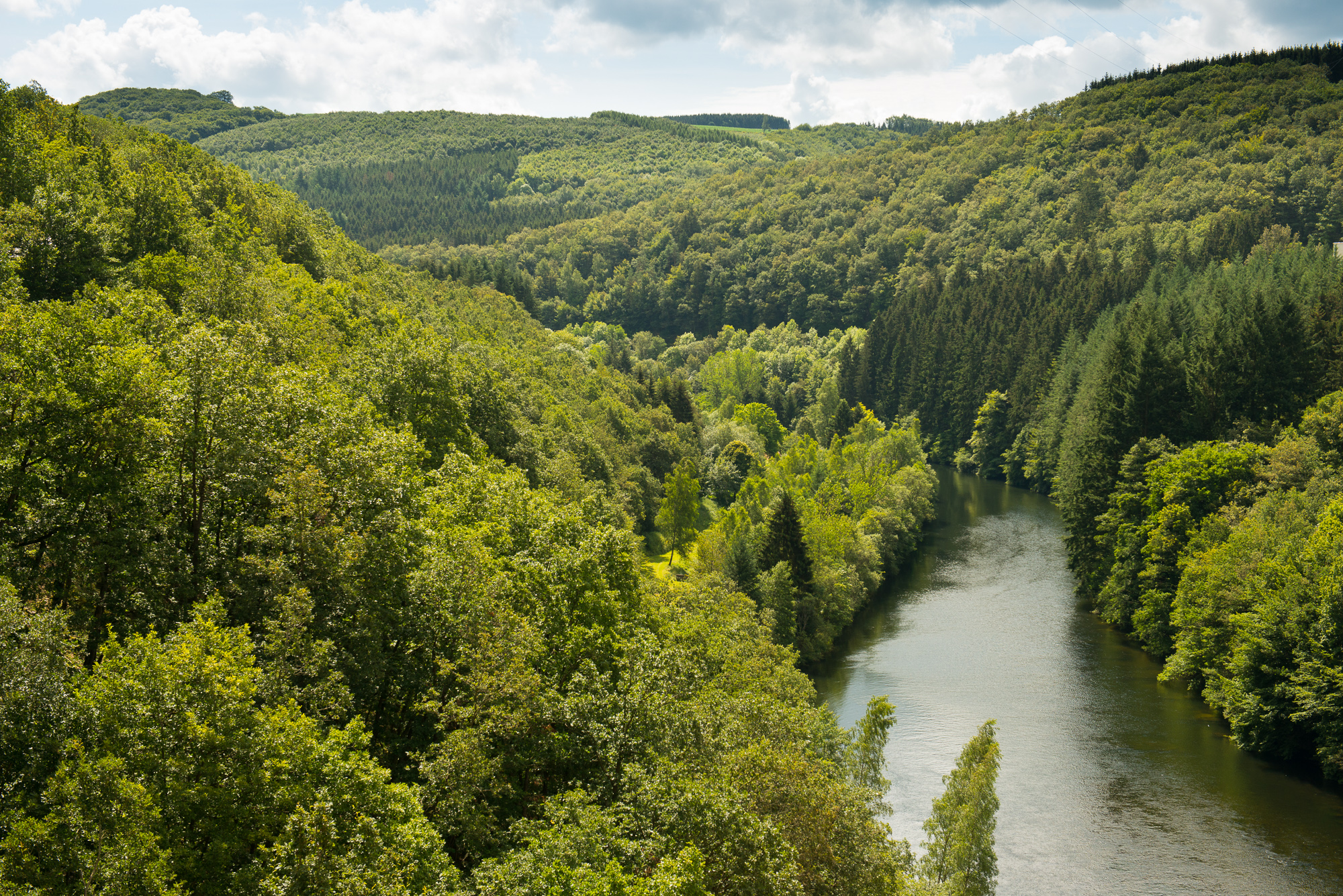The Most Unique and Mysterious Forests in the World - Ardennes