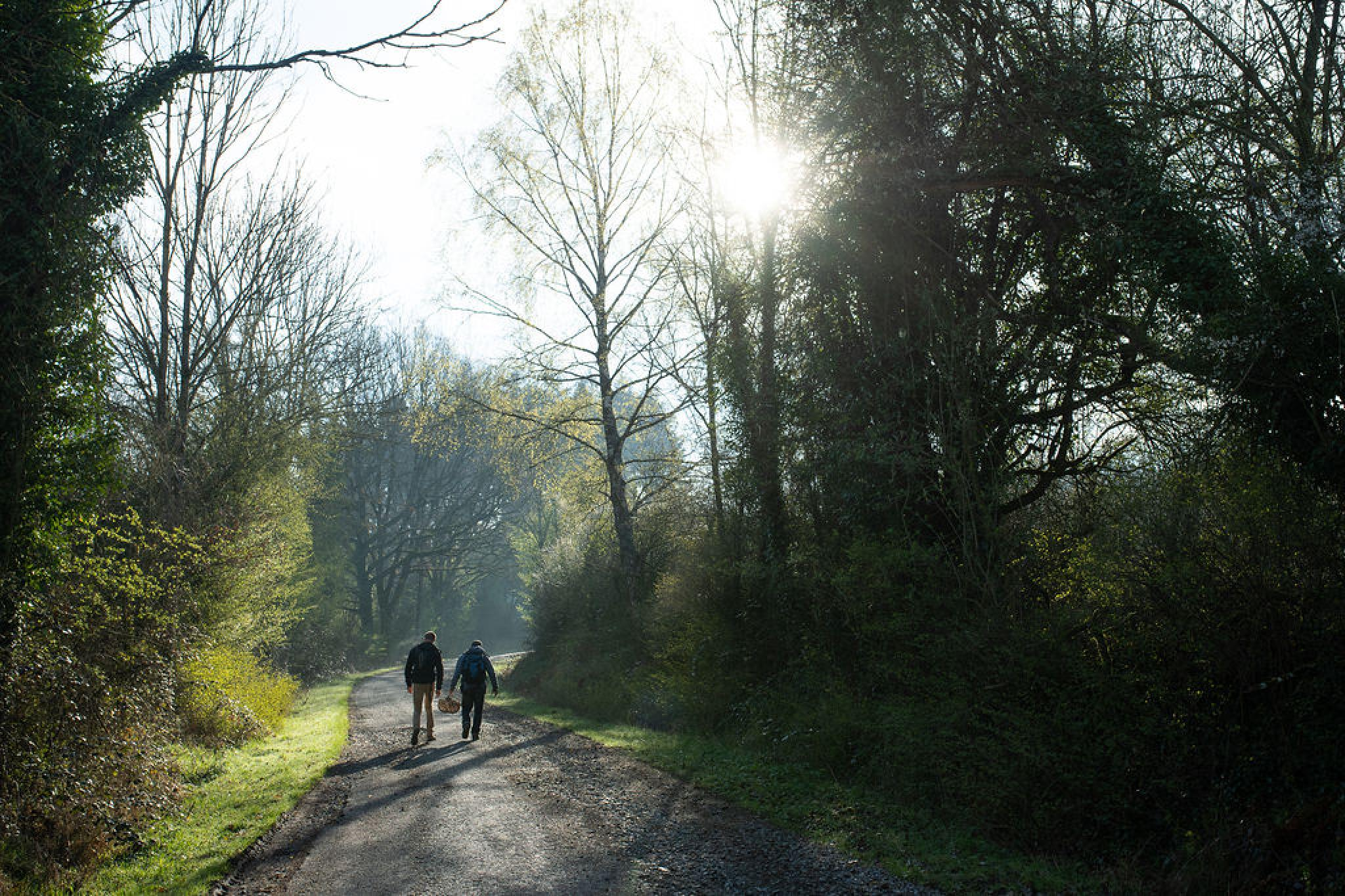 Hiking To Discover Wild And Edible Plants In The Heart Of The Ardennes Ardennes Etape