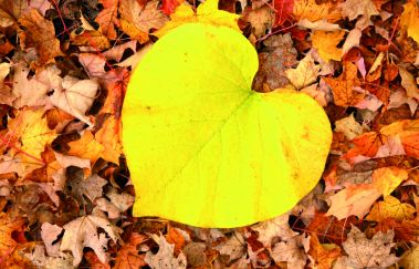 <p>Autumn feeling: 6 tips for turning fall into the best season of the year</p>-Détente to