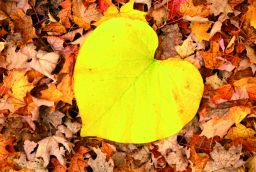 <p>Autumn feeling: 6 tips for turning fall into the best season of the year</p> in
