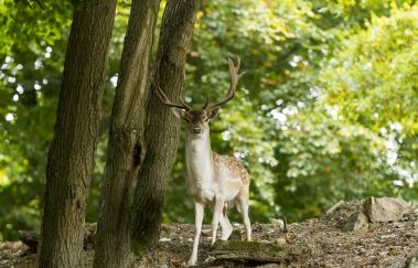 <p>Wild Park Coo</p>-Parcs-animaliers to Province of Liège
