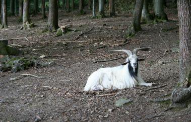 La Roche Wildlife Park-Parcs-animaliers to La Roche en Ardenne - Province du Luxembourg