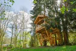For an unforgettable experience, stay at this tree house in the Ardennes